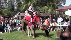 Camel with a rider goes on its knees Stock Footage