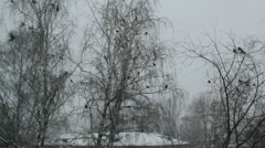 Crows take off from snow-covered tree Stock Footage
