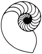 Fibonacci Shell Stock Illustration