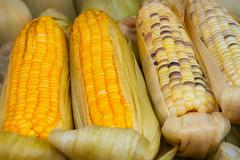 Corn on the Cob for Sale at Vendor's Stall Stock Photos