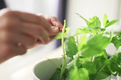 Woman picking basil leaves from plant in flowerpot, slow motion shot at 240 NTSC Stock Footage