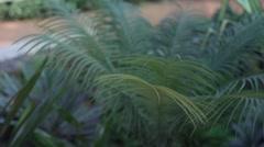 Zen Garden 3 Stock Footage