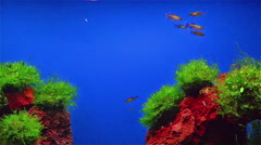 fishes swimming in aquarium with fasle hill in bottom - stock footage