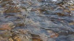 Fast water flow clear mountain river. Stock Footage