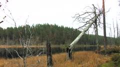 Fallen tree on a lake Stock Footage