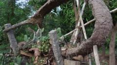 Cactus Zen Garden 10 - stock footage