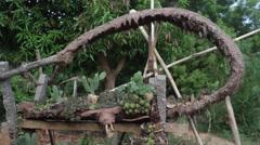 Cactus Zen Garden 13 - stock footage