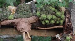 Cactus Zen Garden 14 - stock footage