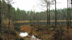 Swamp lake & stream Stock Footage