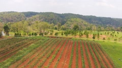 Stock Video Footage of Aerial view grape garden plant in thailand