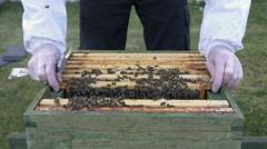 4k bees beehive beekeeper organic honey pollen honeycomb frames Stock Footage