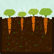 Stock Illustration of Planting carrots and compost