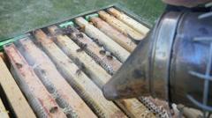 4k bees beehive beekeeper organic honey pollen honeycomb smoker Stock Footage