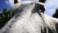 Gray Horse Says Hello Stock Footage