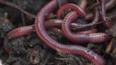 Earthworms16 Stock Footage