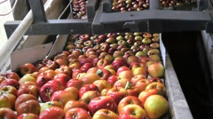 apple washing - stock footage