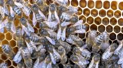 4k bees beehive beekeeper organic honey pollen honeycomb swarm close up Stock Footage