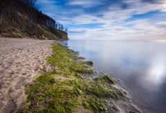 Baltic shore overgrown with algae Stock Photos