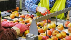 apple packing - stock footage