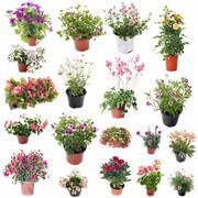 Group of flower plants Stock Photos