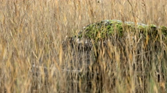 A rock in a lake Stock Footage