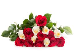Triangle of red and white rose - stock photo