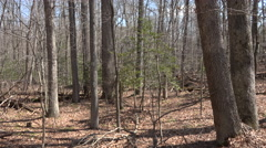 Chancellorsville Virginia forest landscape Civil War area 4K Stock Footage