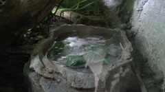 Bathing little Lizard in the zoo of Cologne Stock Footage