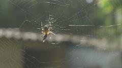 Spider feeding time [4K] _1 Stock Footage