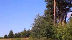 Forest Glade Kiev Ukraine Stock Footage
