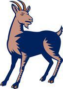 Domestic Goat Woodcut - stock illustration