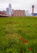 Dallas Texas City Skyline Metro Downtown Trinity River Wildflowers Kuvituskuvat