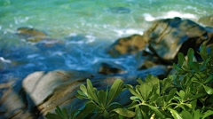 Green, Leafy Plants Growing Wild along Tropical, Thai Beach Stock Footage