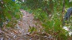 Tourist trekking along a nature trail on Phuket Island in Thailand - stock footage
