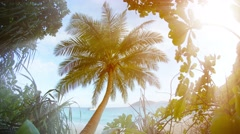Solitary Coconut Palm near the Beach in Southern Thailand Stock Footage
