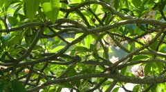 Glare from water on branches of flowering plumeria Stock Footage