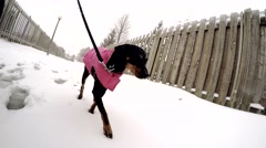 4K Walking The Dog Leash Winter Snow Stock Footage