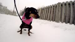 4K Dog Pooping Taking A Dump Winter Stock Footage