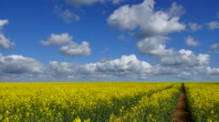 Canola field and Clouds #2 Stock Footage