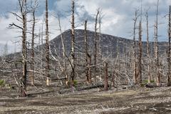 Lifeless desert landscape of Kamchatka: Dead wood (Tolbachik Volcano lava field) - stock photo