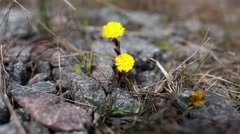 Early Spring Flowers Stock Footage