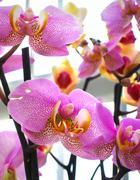 Macro image of bright flowers Stock Photos