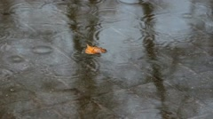 Orange autumn leaves in puddle. rain in city. autumn background. rainy weather. Stock Footage