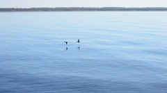 Ducks flying on background of lake with lighthouse Stock Footage