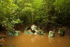 Stock Photo of Small jungle river in borneo