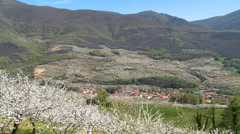 Valley of Cherries with red roofed town, trees in bloom in foreground - stock footage