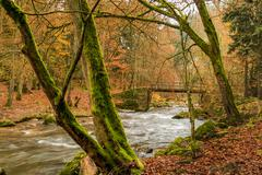 Torrential brook in autumn forest Stock Photos