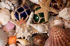 Cluster of Seashells - stock photo