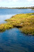 Bolsa Chica Wetlands Stock Photos