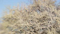 the wind blows a blossoming tree with white flowers. Nature, Cerasus, spring - stock footage